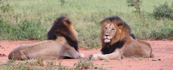 Reportage au cœur d'une réserve animalière en Afrique du Sud